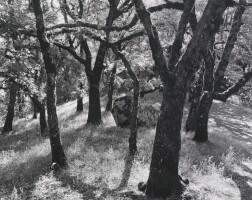 7. Ansel Adams