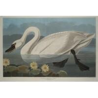 13. John James Audubon (after)
