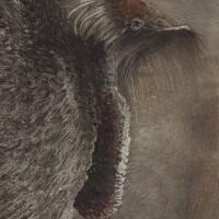 142. alfred kubin | kasuarkopf (head of a cassowary)