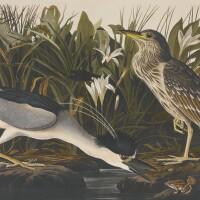 101. audubon, john james