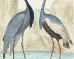 17. martinet, histoire des oiseaux, peints dans tout leurs aspects. paris: chez l'auteur, 1787-[1790?]