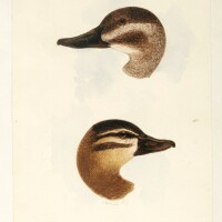9. a collection of three volumes on ducks
