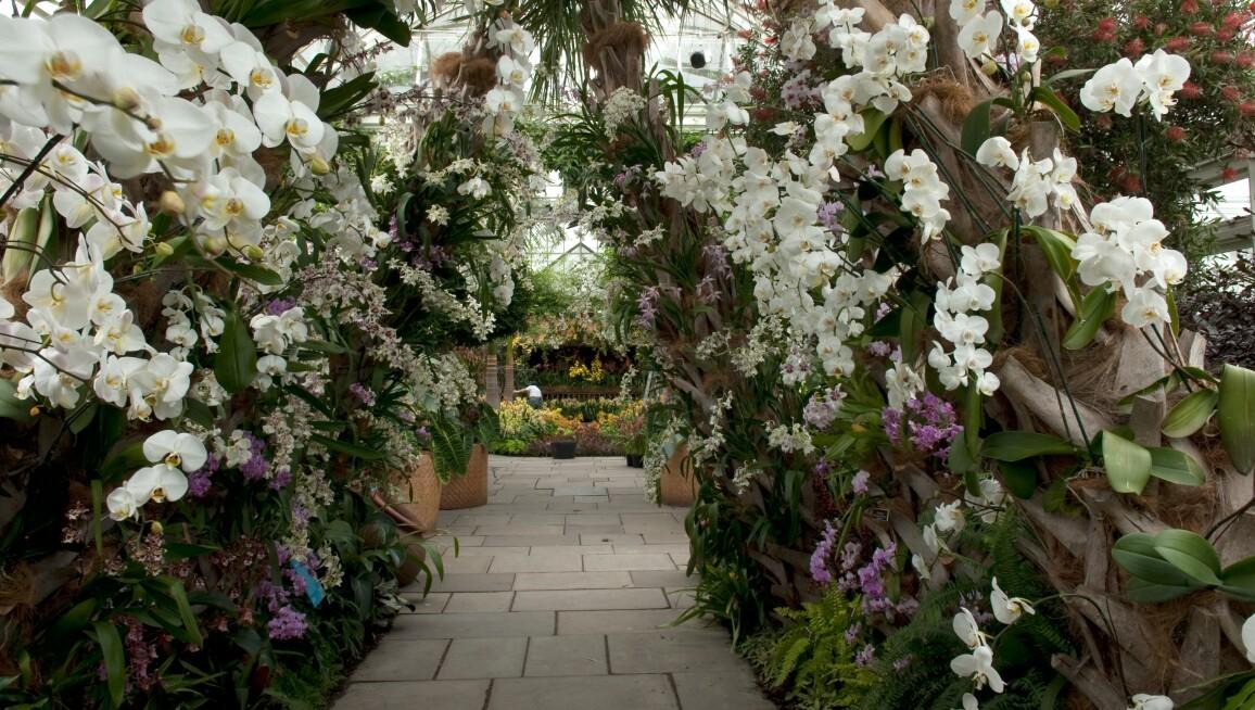 Interior View, New York Botanical Garden