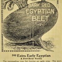 27. wally hedrick   egyptian beat