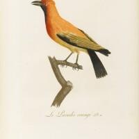 10. audebert-vieillot. oiseaux dorés..., 1802. 2 vol. in-folio, 1/2 chagrin rouge de l'époque. edition originale illustrée.