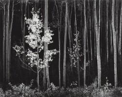 8. Ansel Adams