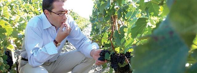 wine-futures-vineyard-2.jpg