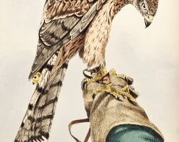 22. salvin and brodrick. falconry on the british isles. 1873