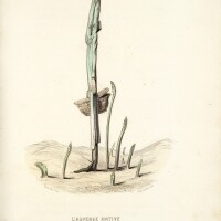 19. Empire des Légumes, L'