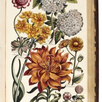 15. hill, eden: or, a compleat body of gardening, [1756]-1757