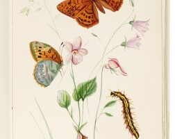 17. johnson, a life history of the british butterflies, 1906