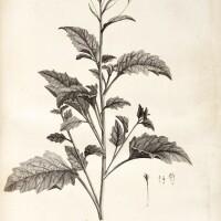 19. linnaeus. hortus cliffortianus. 1737