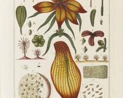 9. ledermüller, martin frobenius