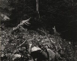 11. Edward Weston