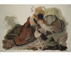 4. John James Audubon (after)