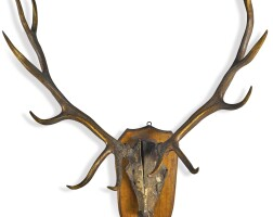 13. a large set of red deer antlers mounted on an oak shield, late 19th / early 20th century