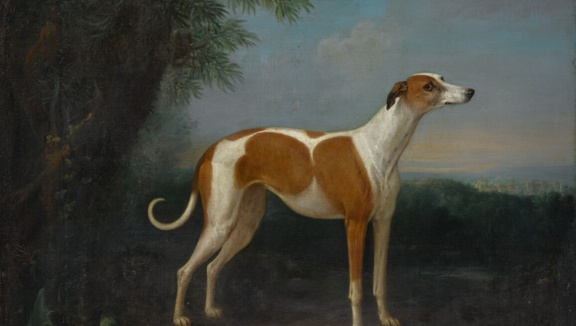John Wootton, A greyhound in a landscape, with a view of Windsor Castle beyond
