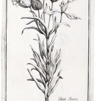 13. garidel, histoire des plantes, 1715