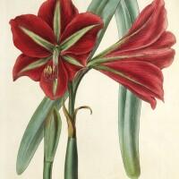 6. curtis, botanical magazine, 37 volumes